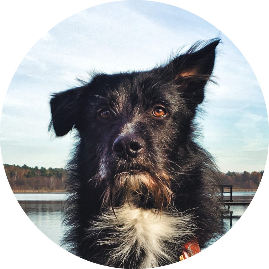 Feelgood Manager Floyd, a black and white stray dog with red brown eyes and one standing ear.